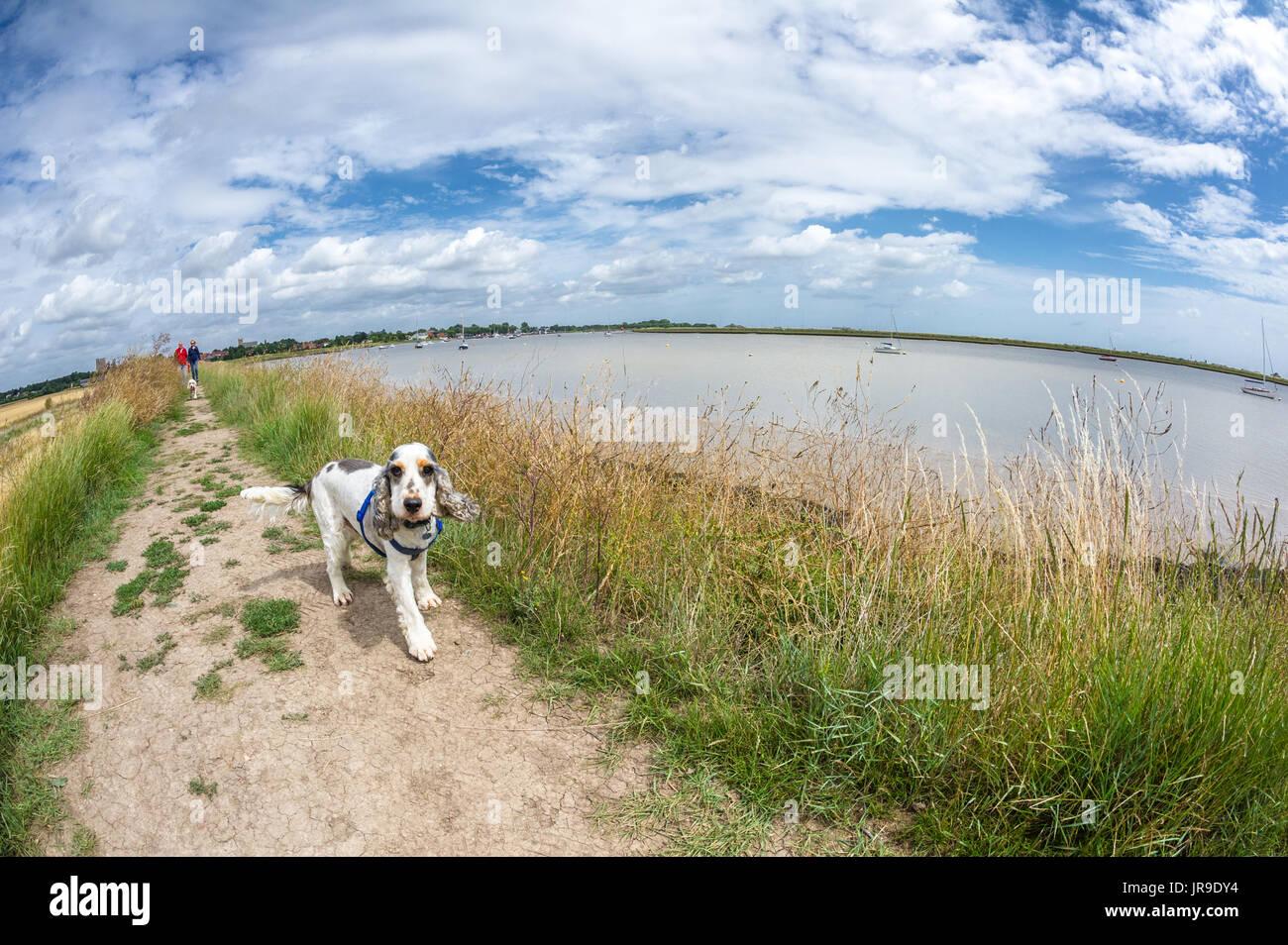 Dog Walks Orford Suffolk