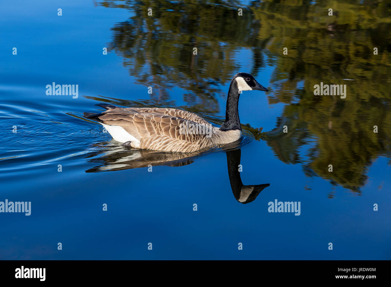 canada goose site en francais