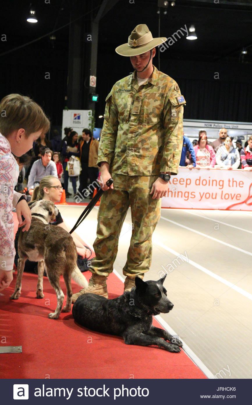 Explosive Detection Dogs Edd School Of Military Engineering Stock