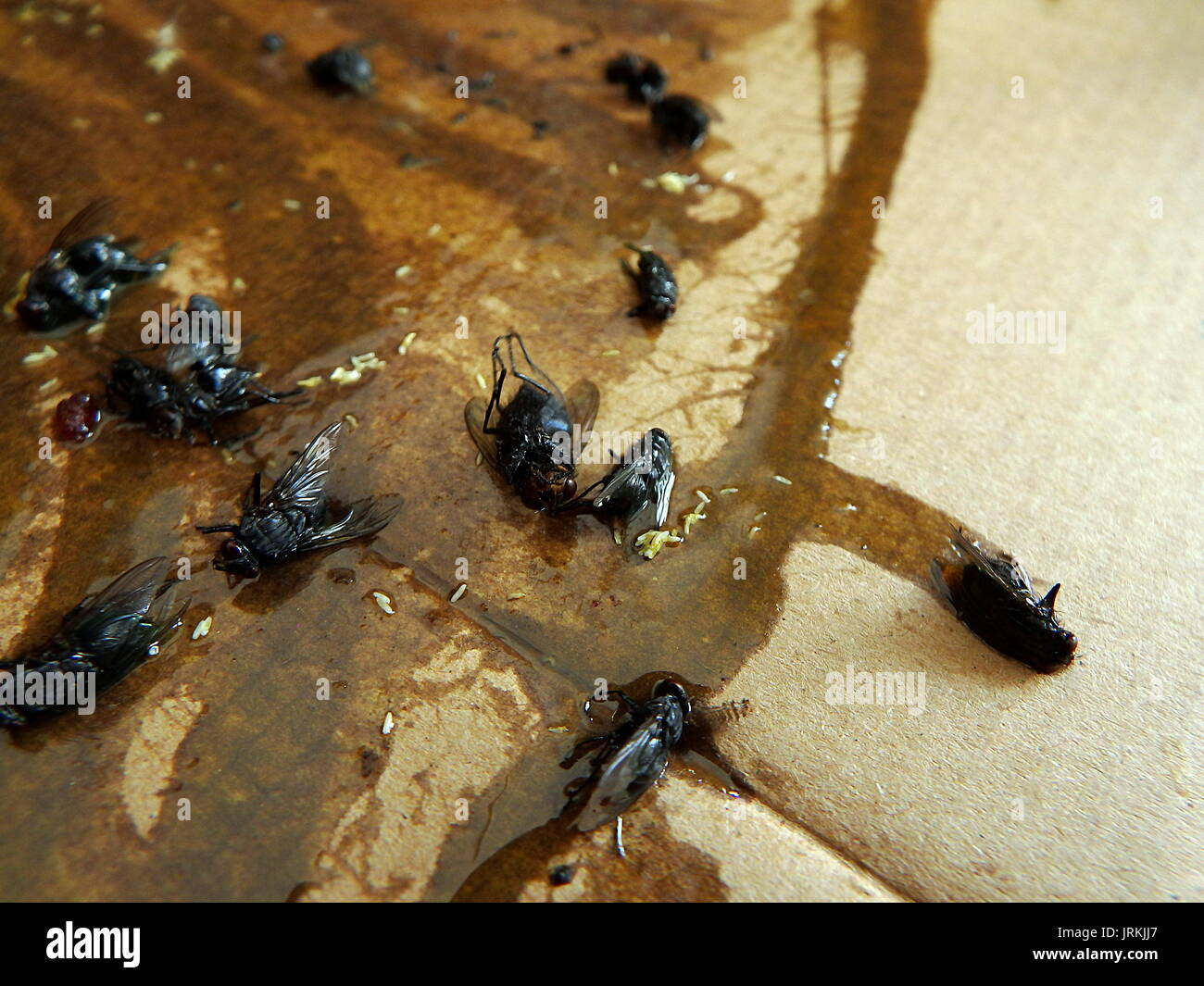 pheromone paper Pheromone that causes clumping or clustering behavior in a species and brings individuals into a closer proximity is called aggregation pheromone this paper presents a novel method for image segmentation considering the aggregation behavior of ants.