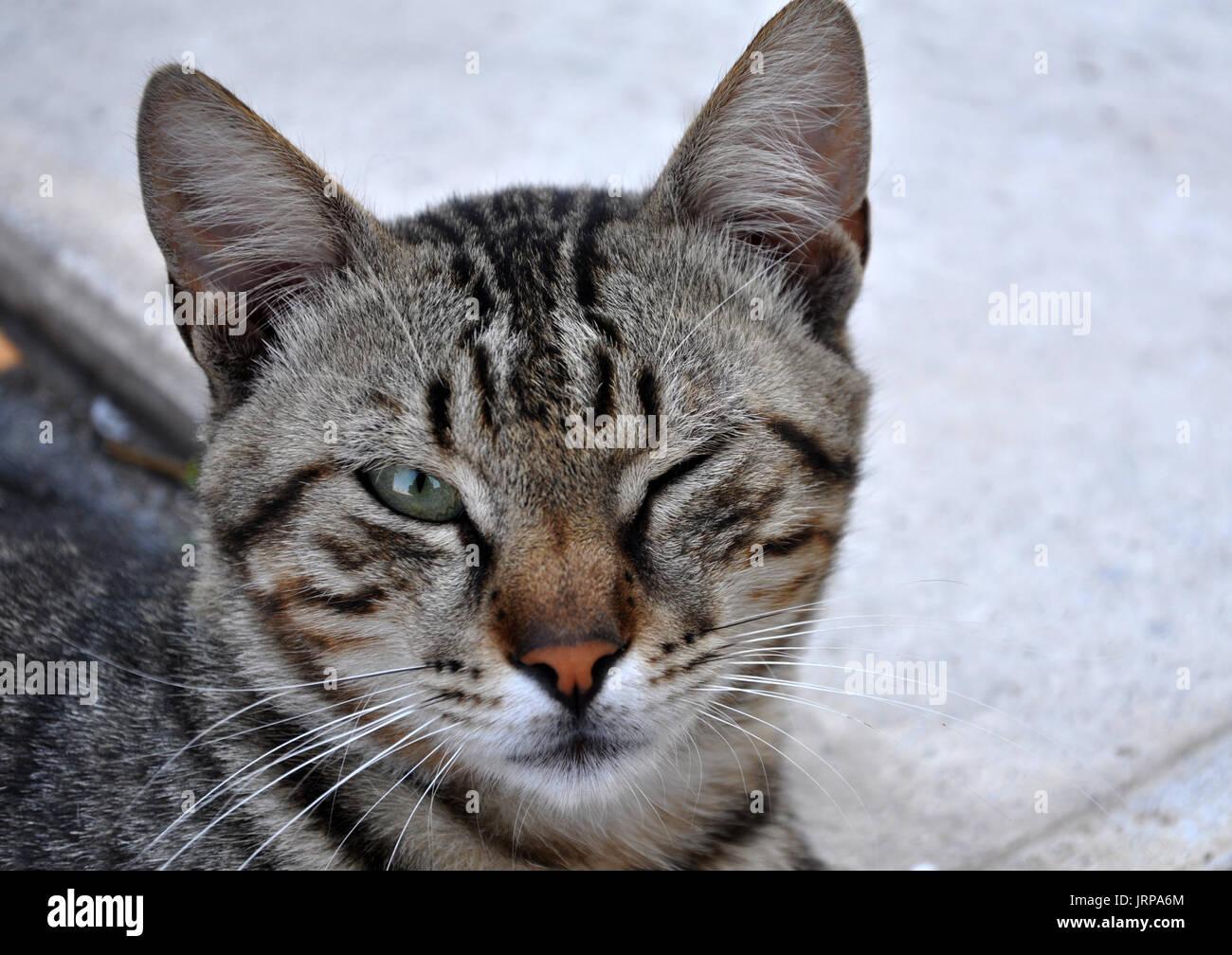 sand cats predators