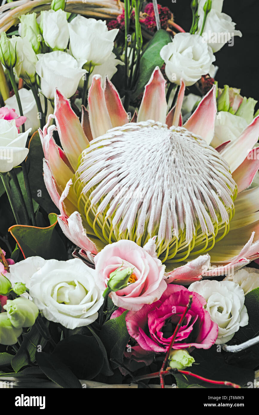 Protea flower in bouquet Stock Photo: 152582621 - Alamy