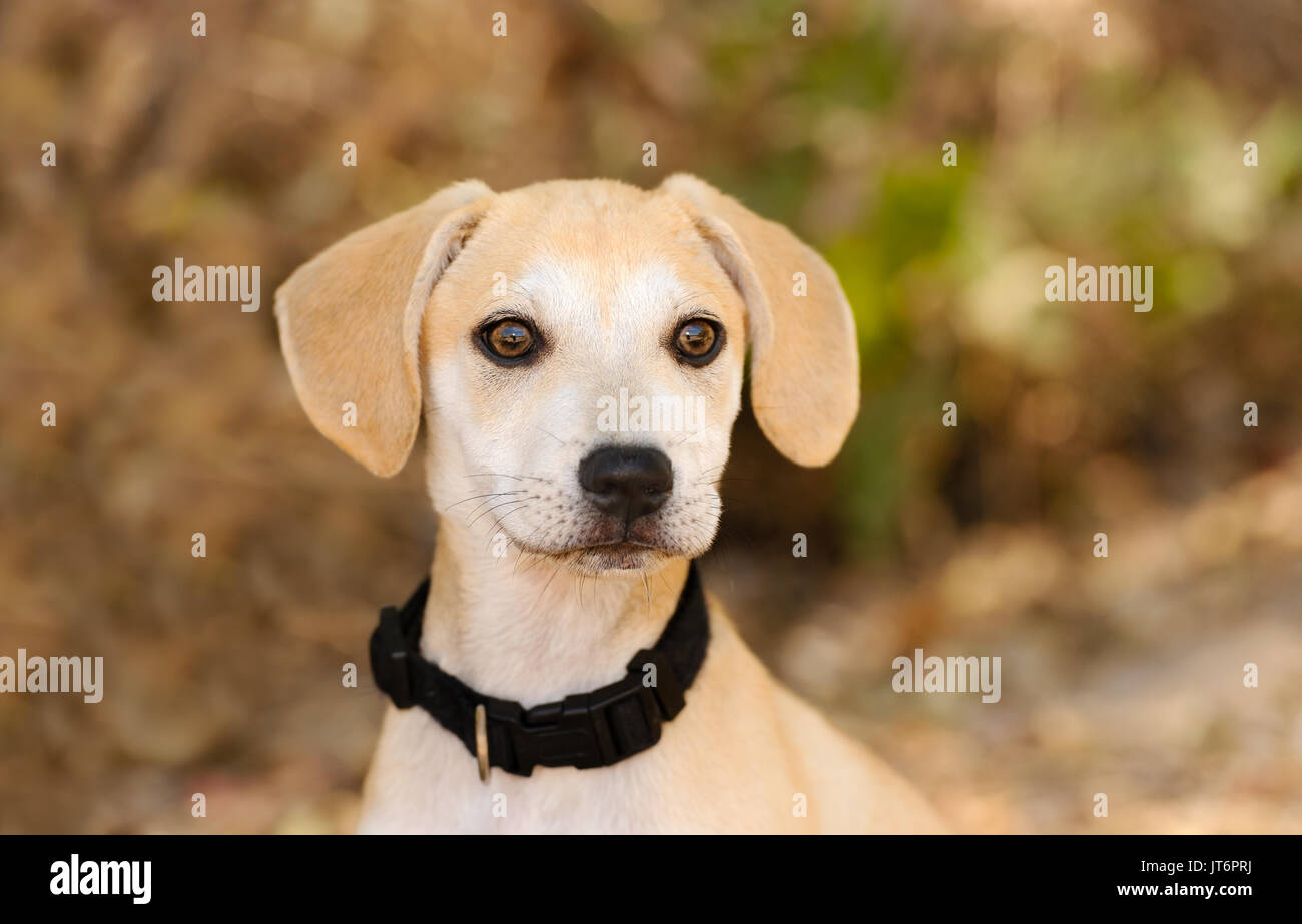 Puppy dog adopt is a cute adorable puppy outdoors in nature