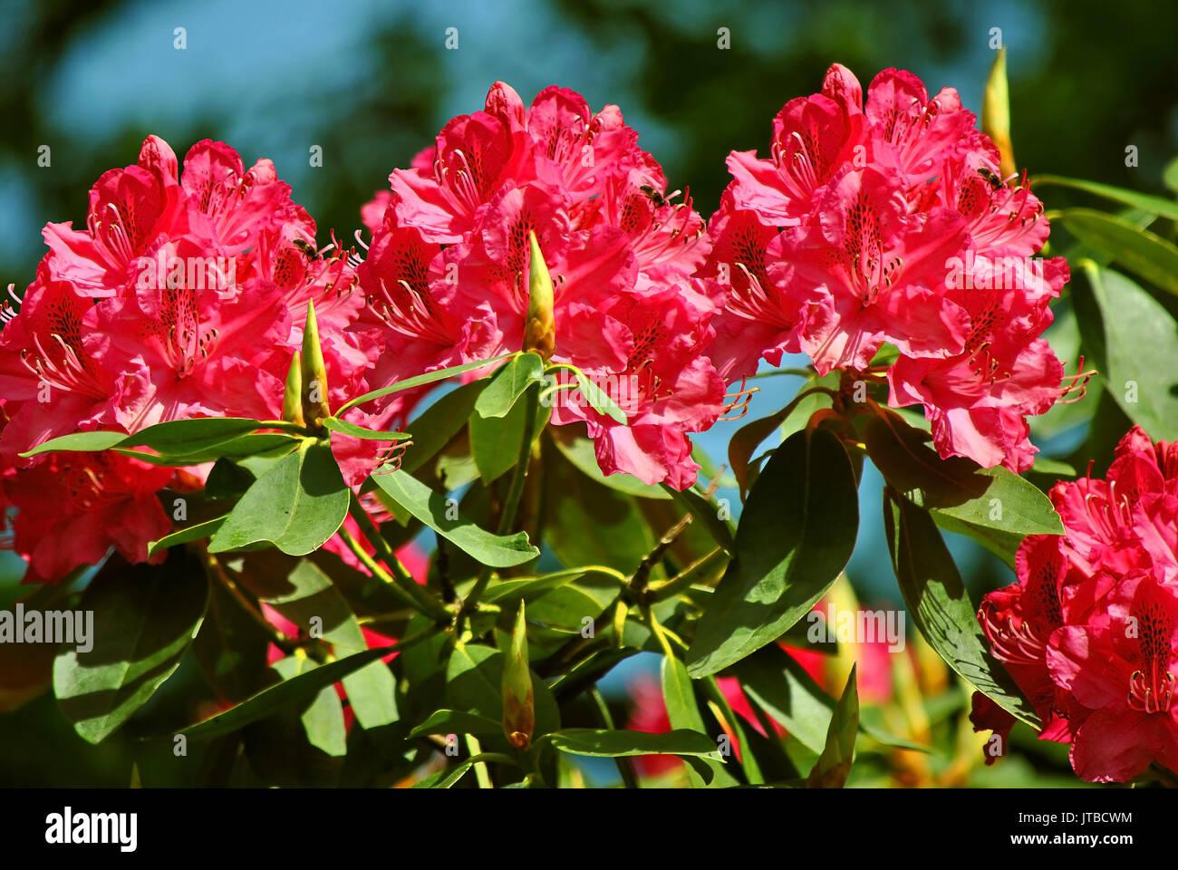 Cynthia Flowers Nude Photos 50
