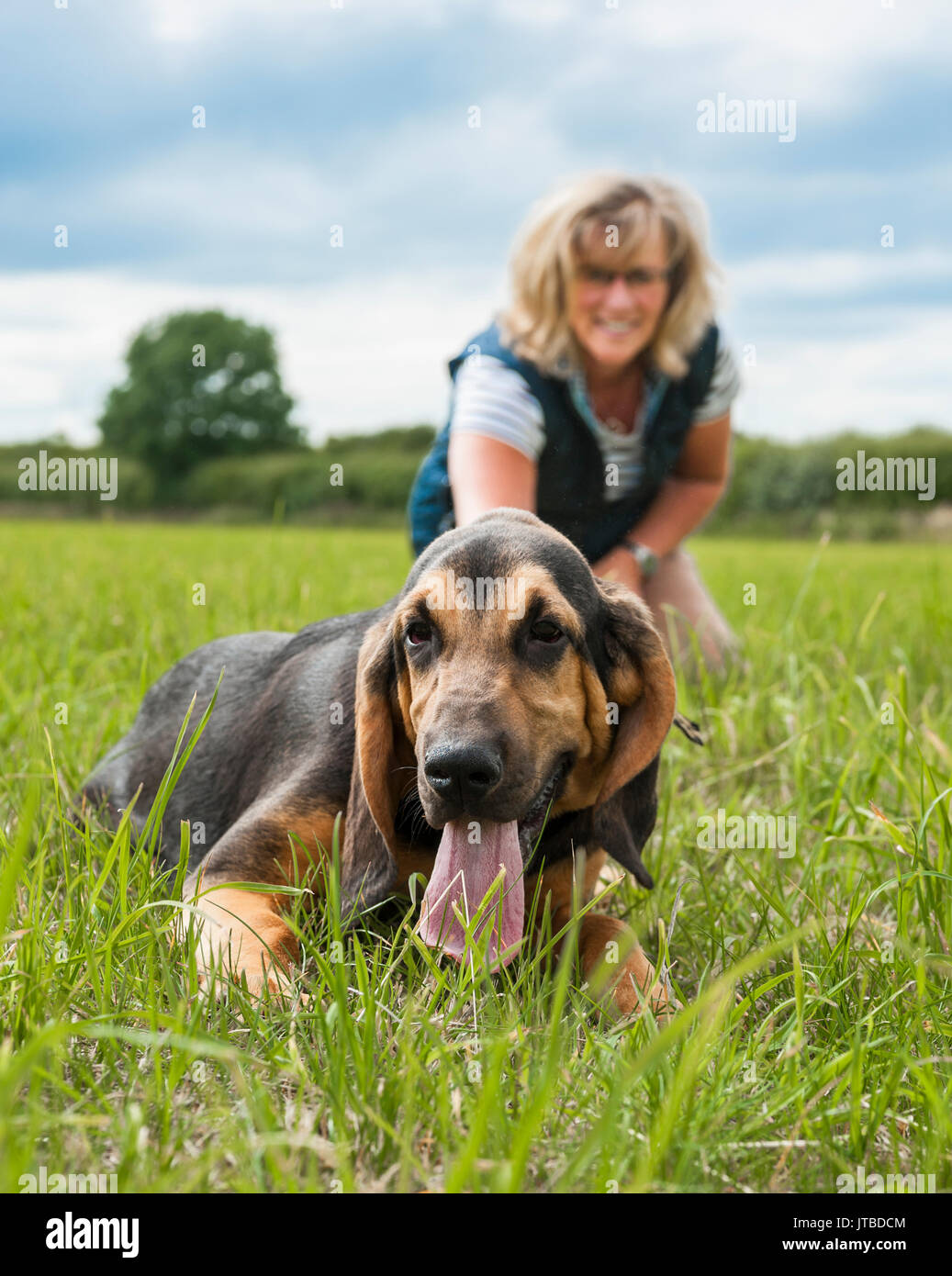 One On One Dog Training In Yeovil Somerset