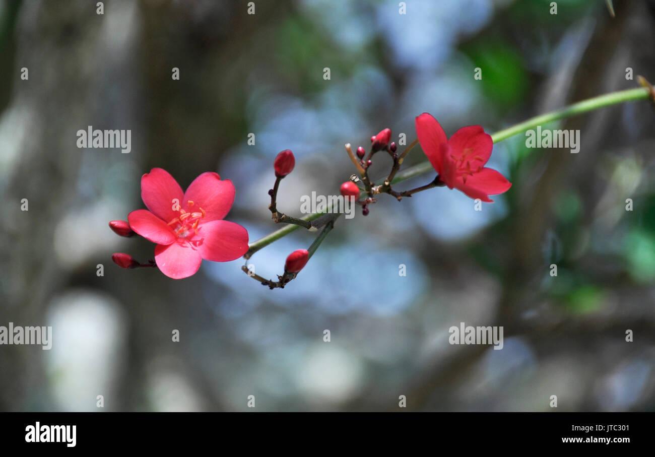 Little Pink Flowers Stock Photo 152700465 Alamy