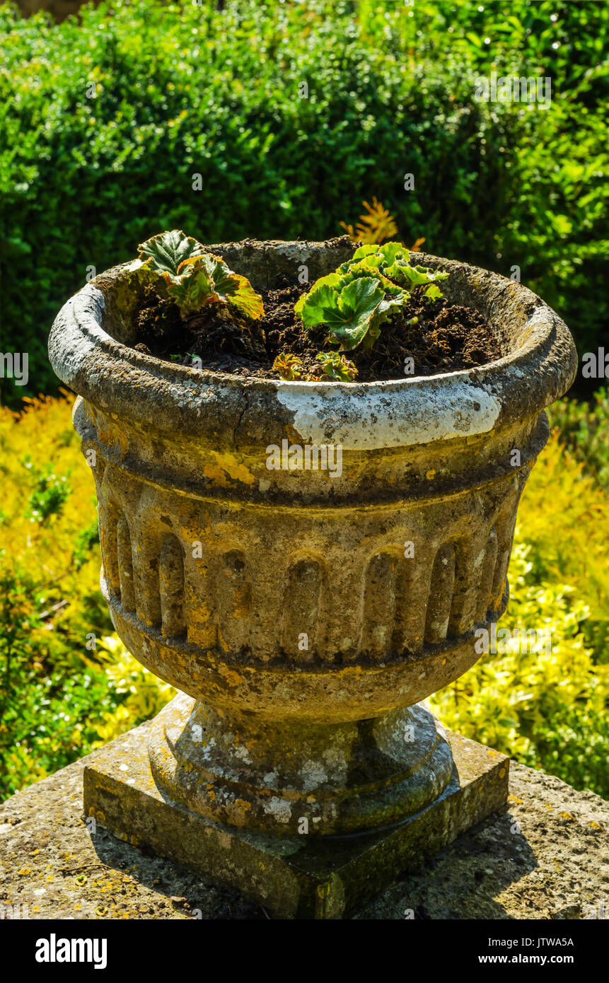 Concrete flower pots in the garden on a pedestal stylized antique, a ...