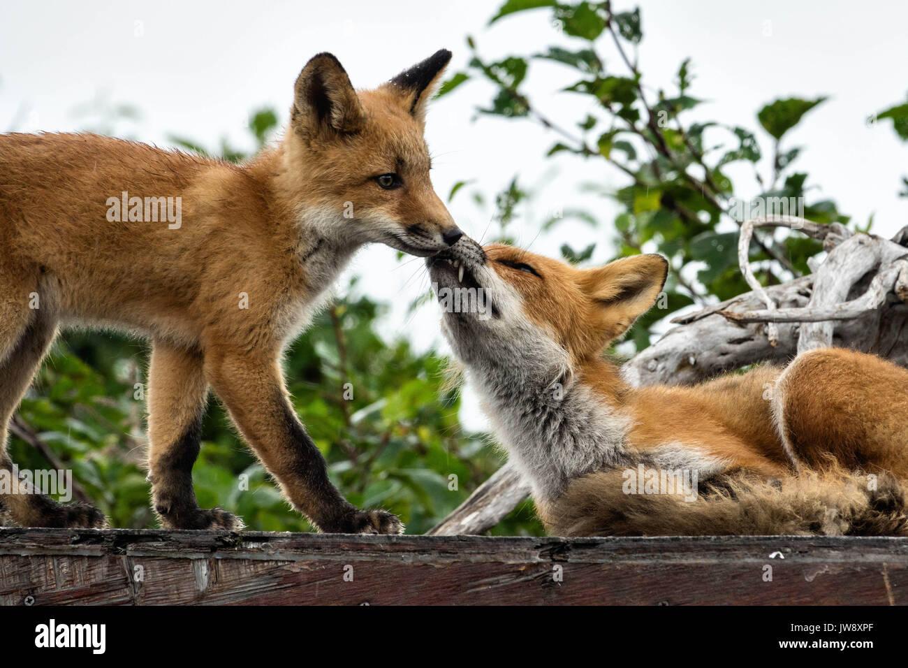 personals in fox river alaska