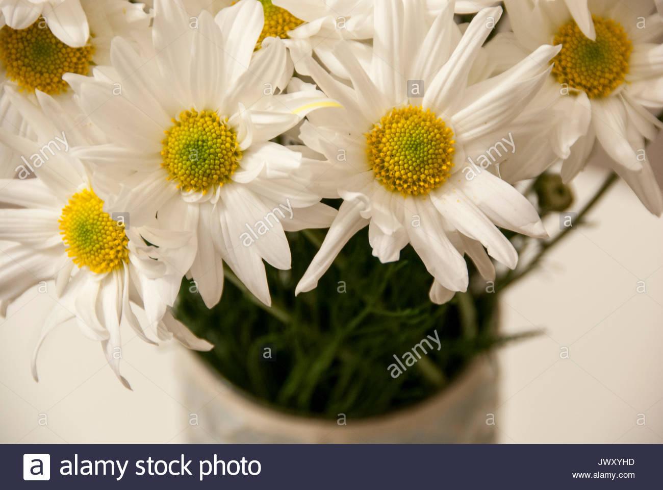 Yellow daisies in vase stock photos yellow daisies in vase stock daisies in a vase stock image reviewsmspy