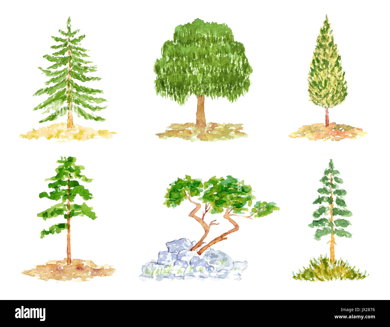the difference between deciduous and coniferous trees