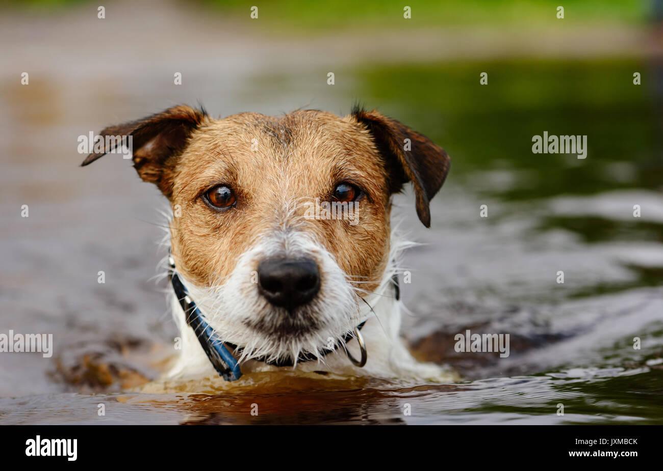 Play Dog Head Stock Photos & Play Dog Head Stock Images ...