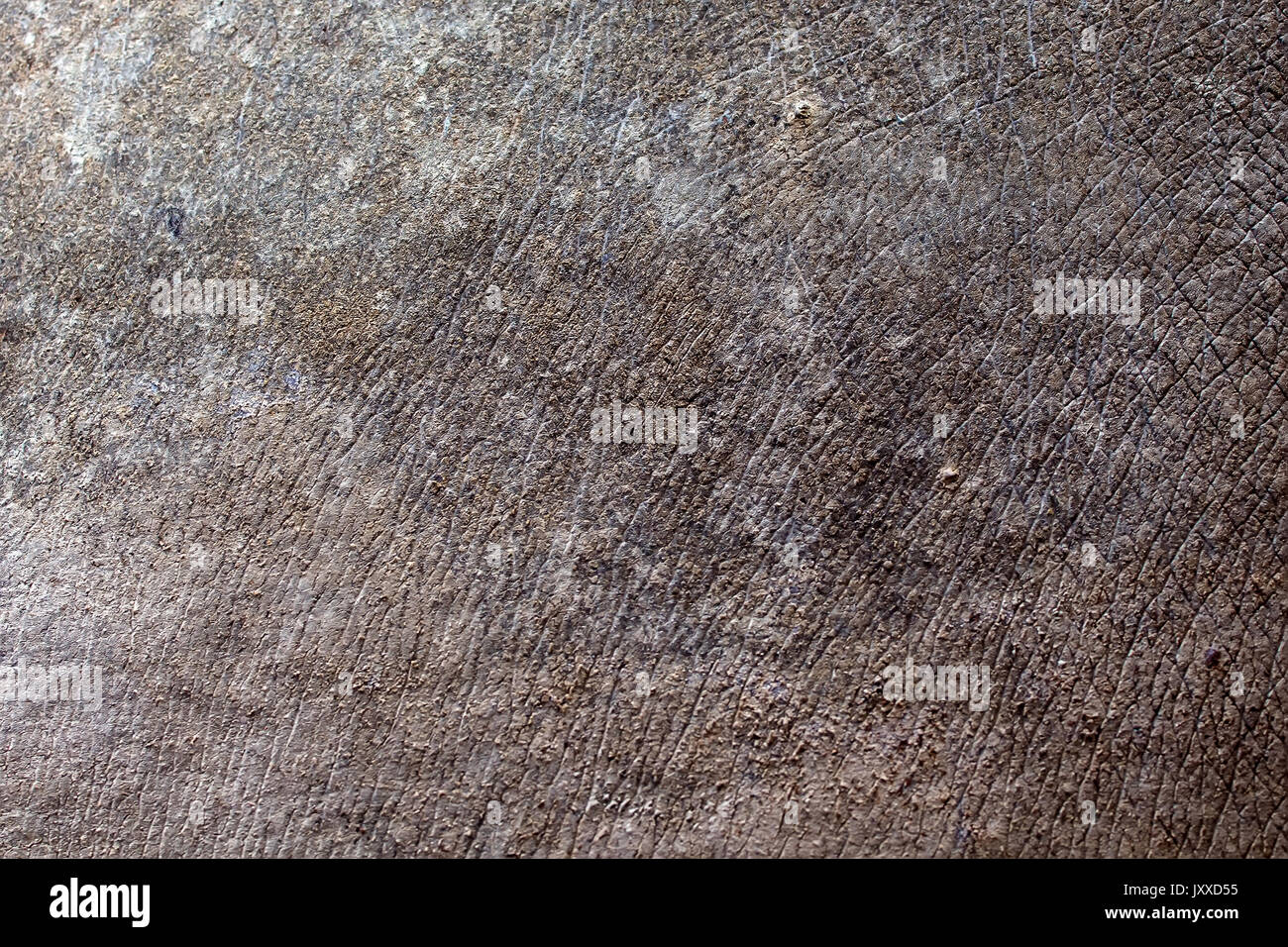 Rhino Skin Texture Stock Photos & Rhino Skin Texture Stock ...