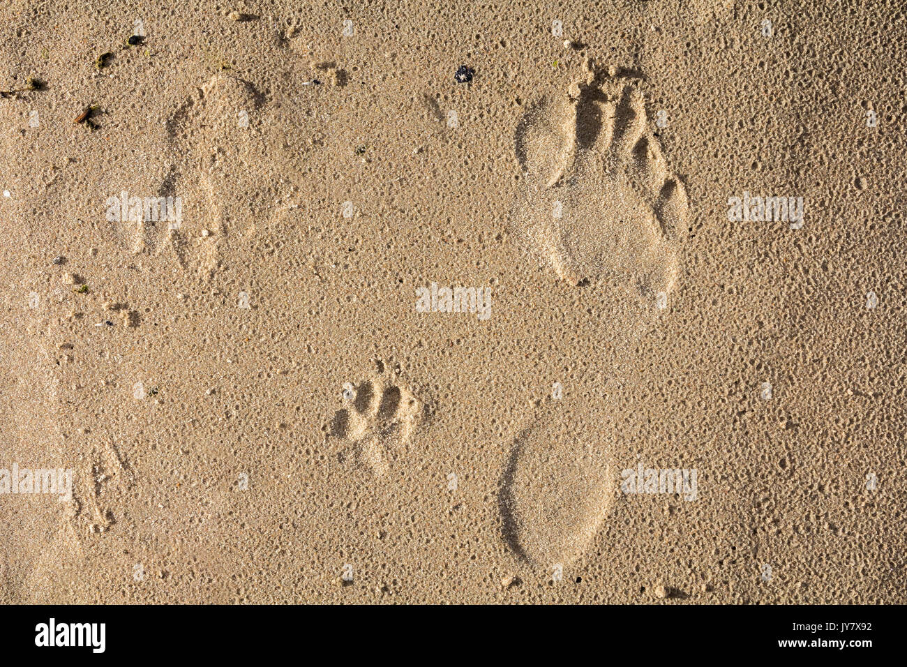 7a6c987f9fba small dog and humans feet prints on a wet sand, abstract background · Juris  Teivans / Alamy Stock Photo