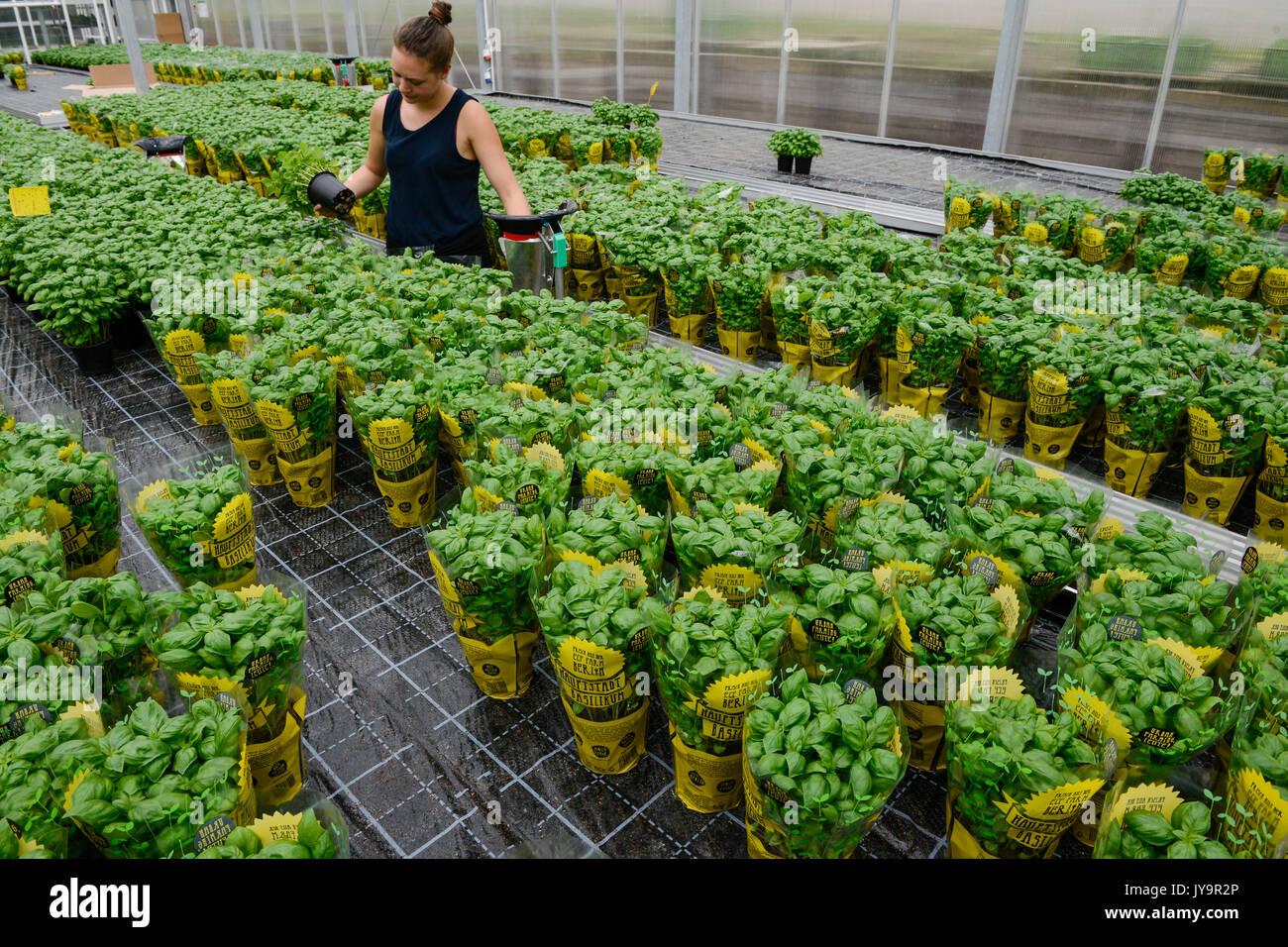 urban gardening in berlin germany stock photos urban gardening in berlin germany stock images. Black Bedroom Furniture Sets. Home Design Ideas