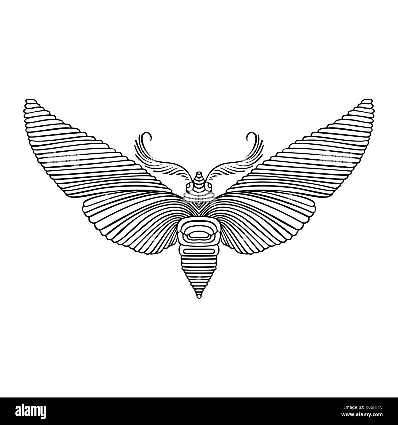 Night Butterfly Adult Coloring Book Vector Illustration Anti Stress Zentangle Style Black And White Sketch