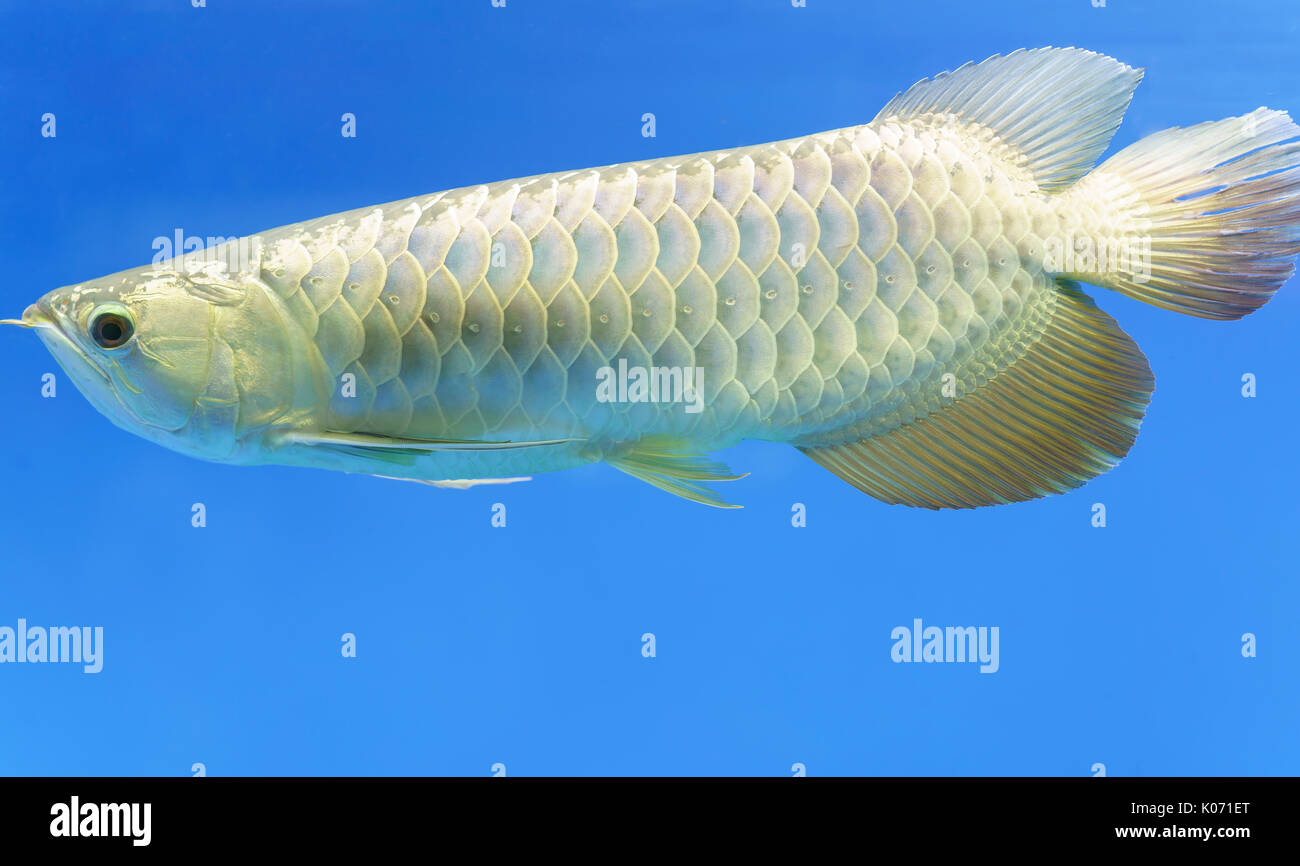 Fish Keeping Stock Photos \u0026 Fish Keeping Stock Images - Alamy