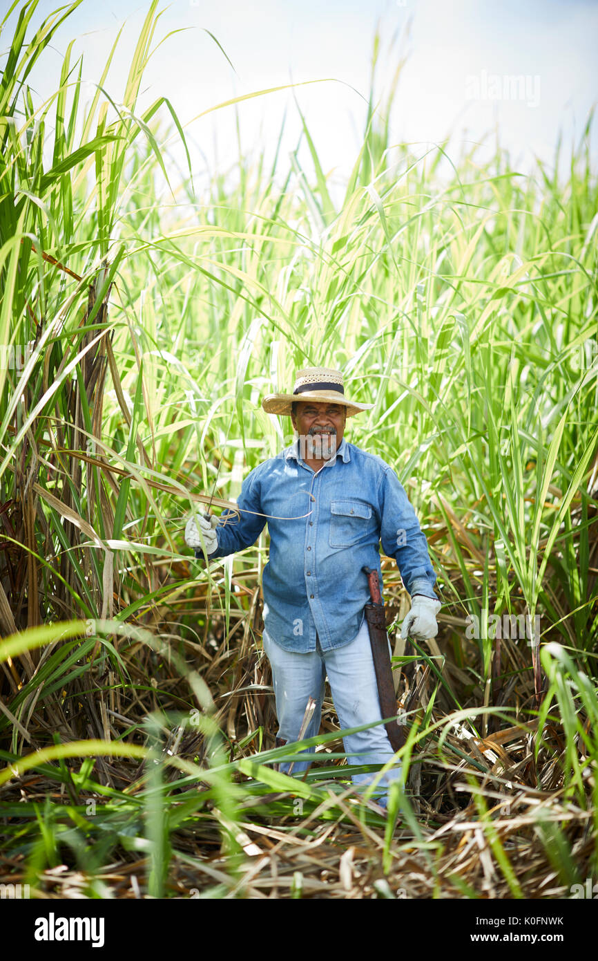 Cuban Cuba Cardenas Open Air Sugar Cane Grass In The Museum Farm Plantation