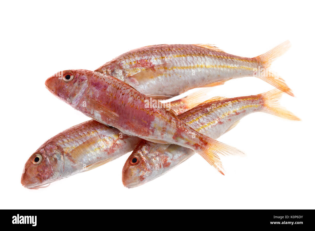 Barb fish stock photos barb fish stock images alamy for Red mullet fish
