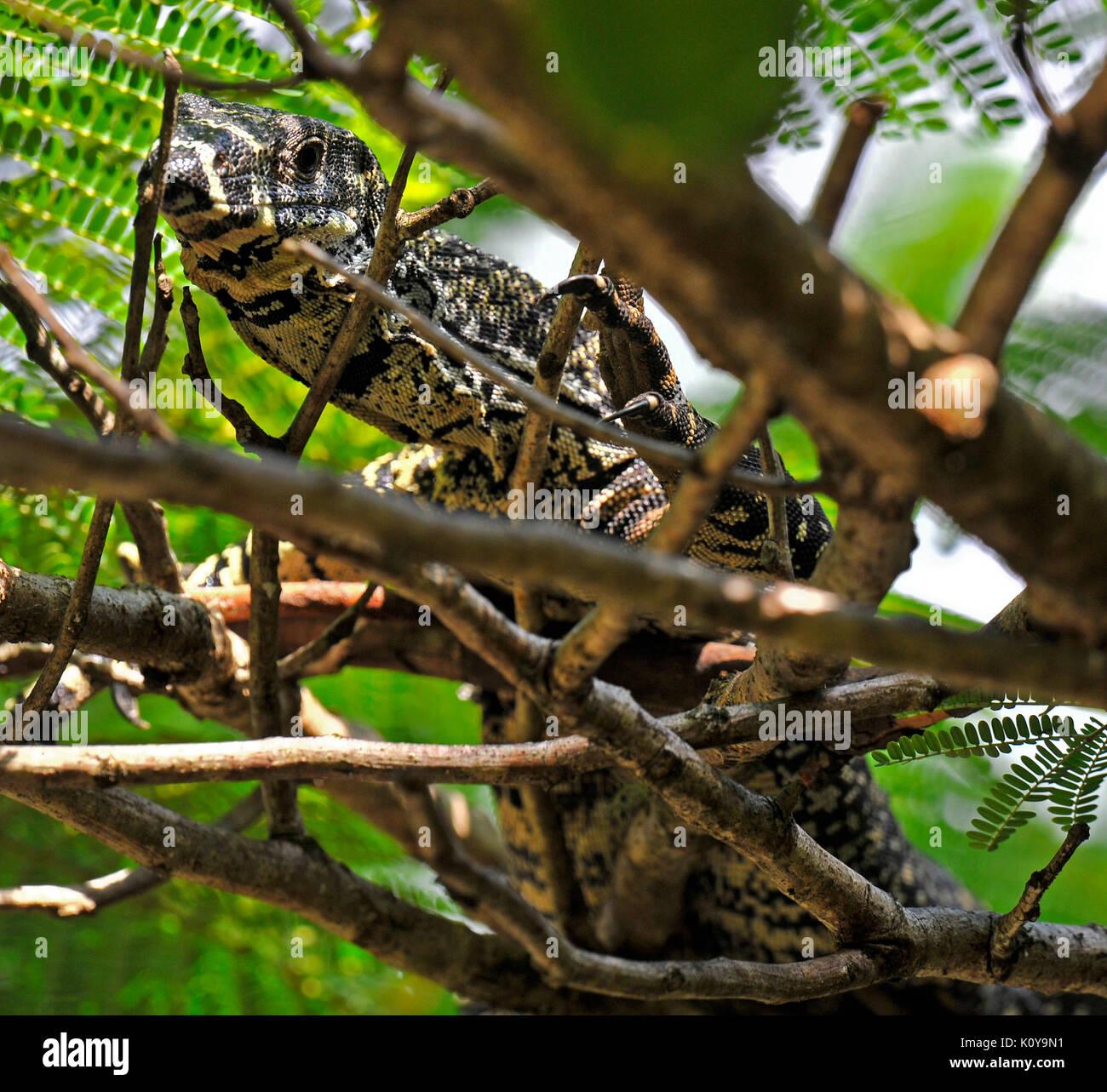 australia reptile garden stock photos u0026 australia reptile garden