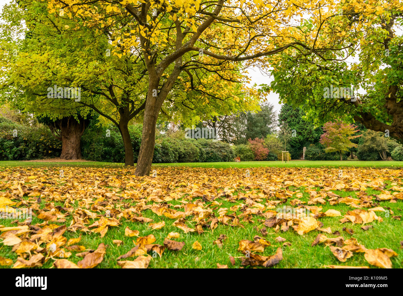 Fallen leaves of trees on the background of green grass in the park ...