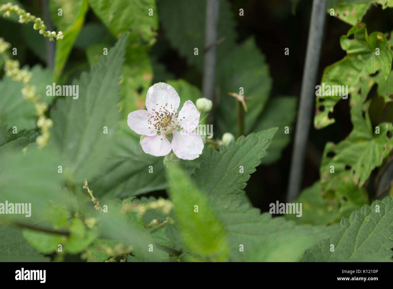 Amazing Blooming White Flowers Under The Evening Sunlight Five