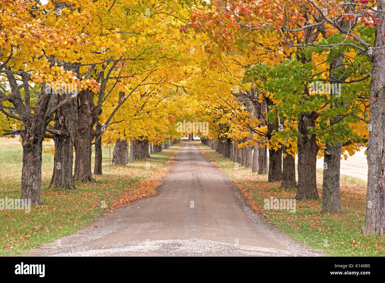 a long driveway with green red and yellow autumn trees lining the