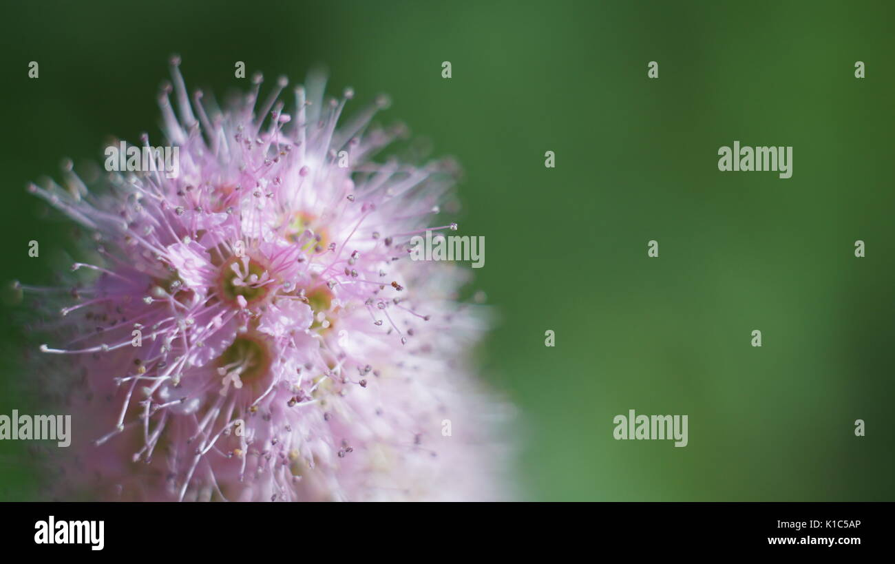 Send flowers cheap send flowers funeral flowers silk flowers stock the pink flower green background stock image izmirmasajfo