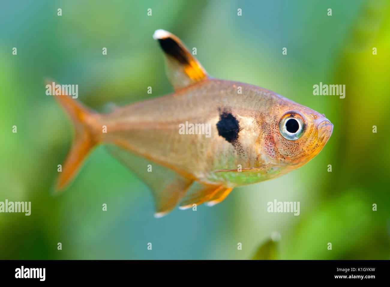 Beautiful planted tropical freshwater aquarium stock for Beautiful tropical fish