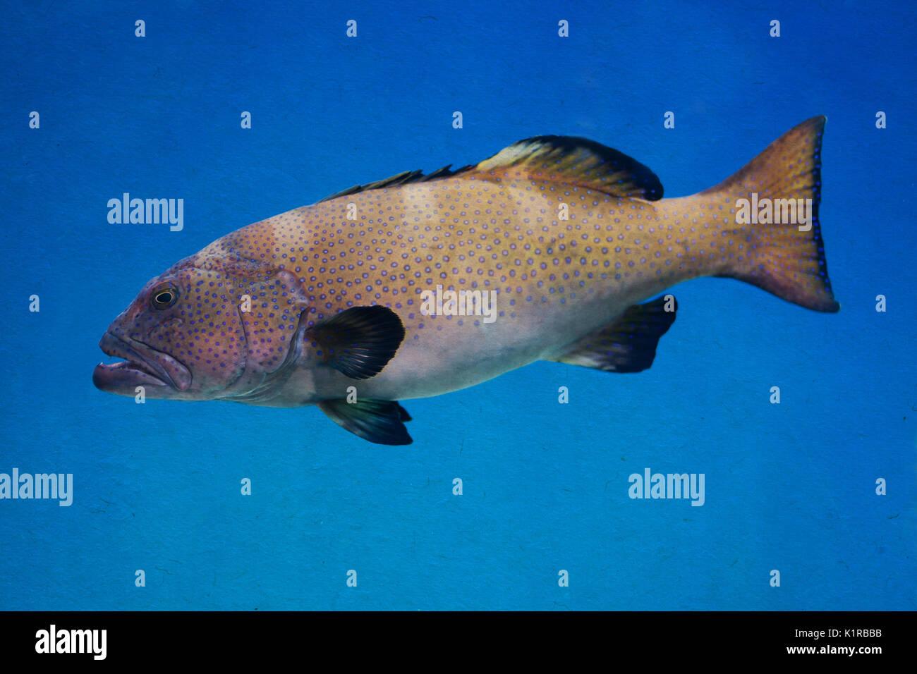 Gills Fish Stock Photos & Gills Fish Stock Images