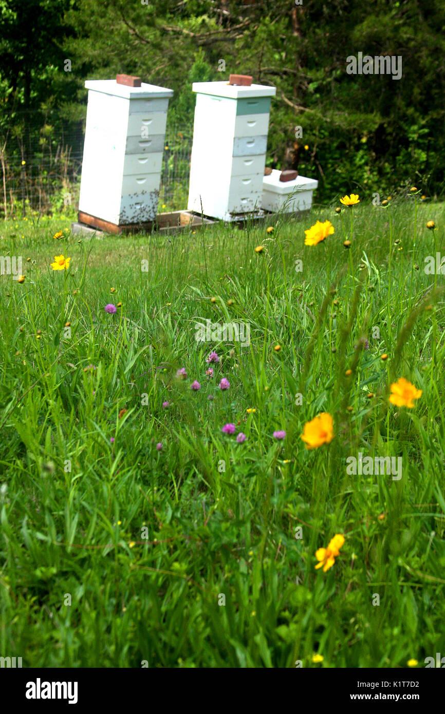 honey backyard beekeeping stock photos u0026 honey backyard beekeeping