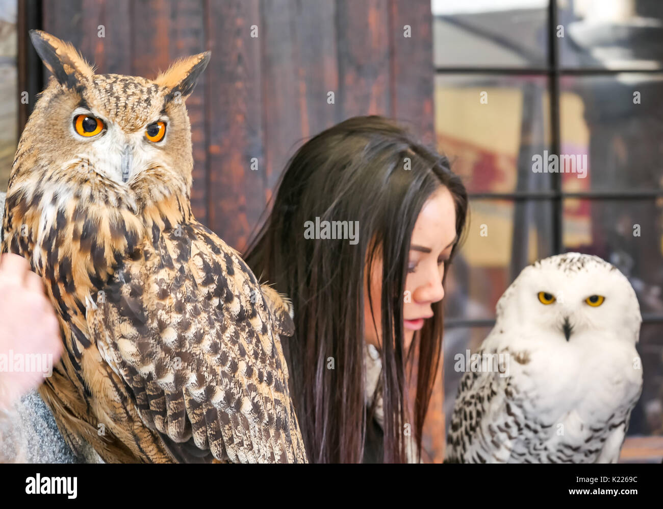 white owl women How many years has snowy white owl woman been walking with me this thought has made its way into my consciousness looking back there is a memory from when i was a child.