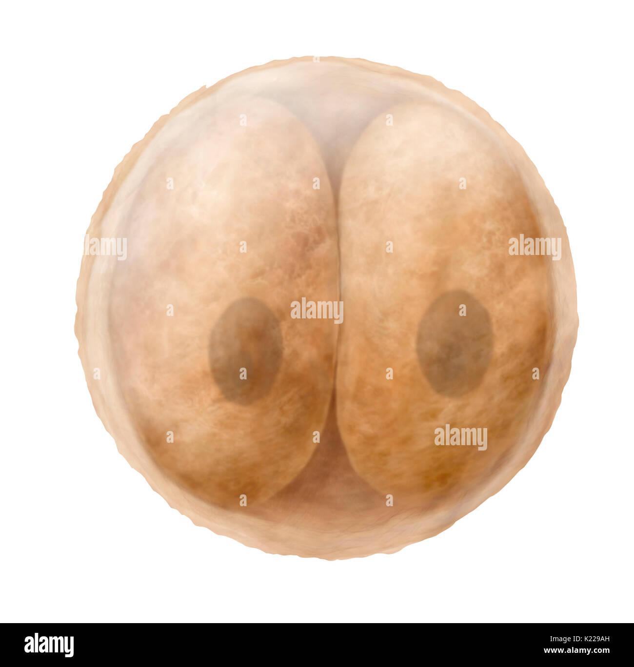 sperm and zygote banking jpg 1080x810