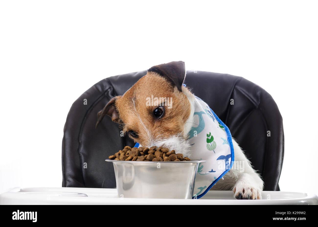 Man Eats Dog Food Joke