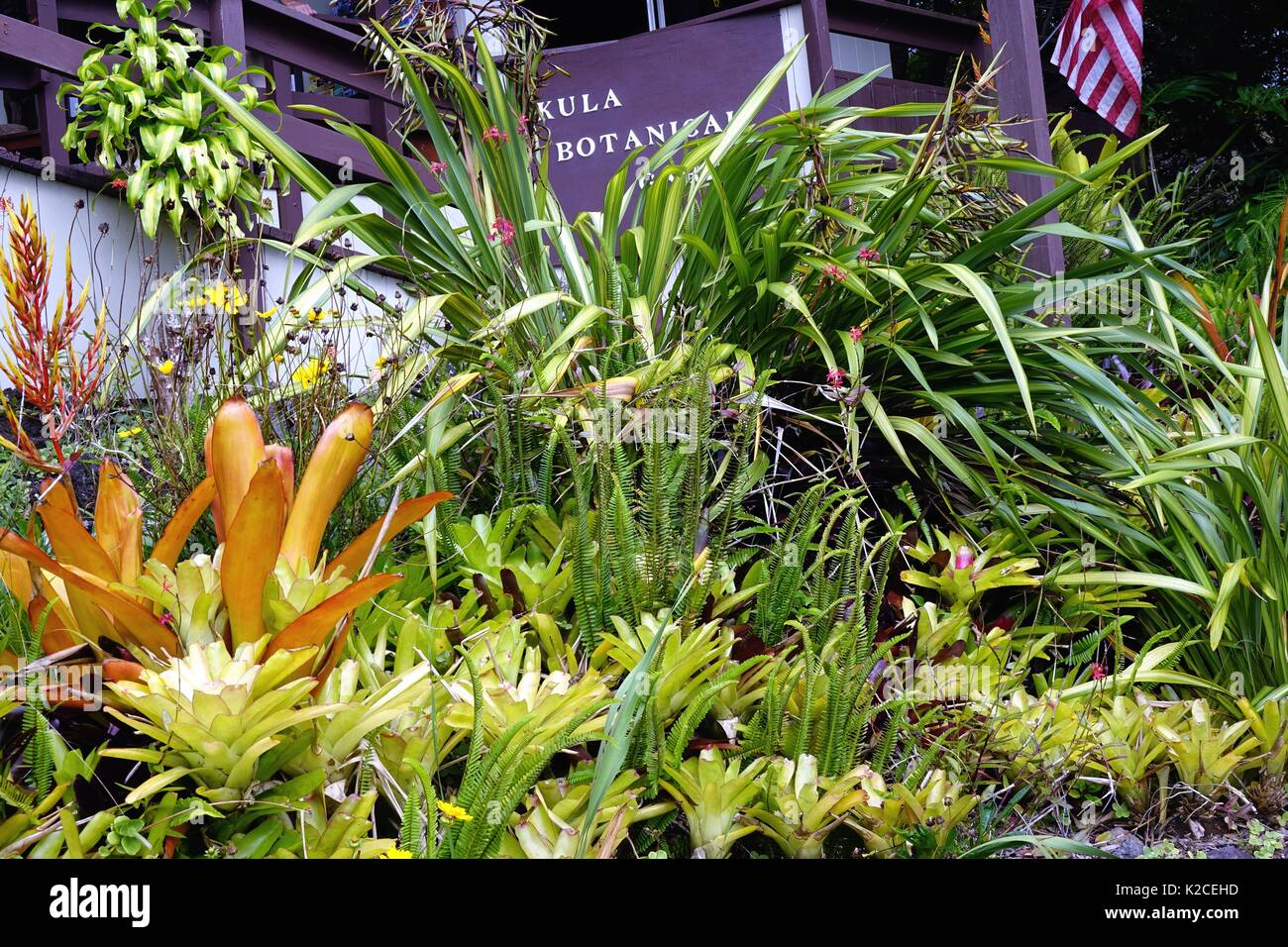 Colorful Plants Adorn The Entrance Building In Kula Botanical Garden, Kula,  Maui, Hawaii