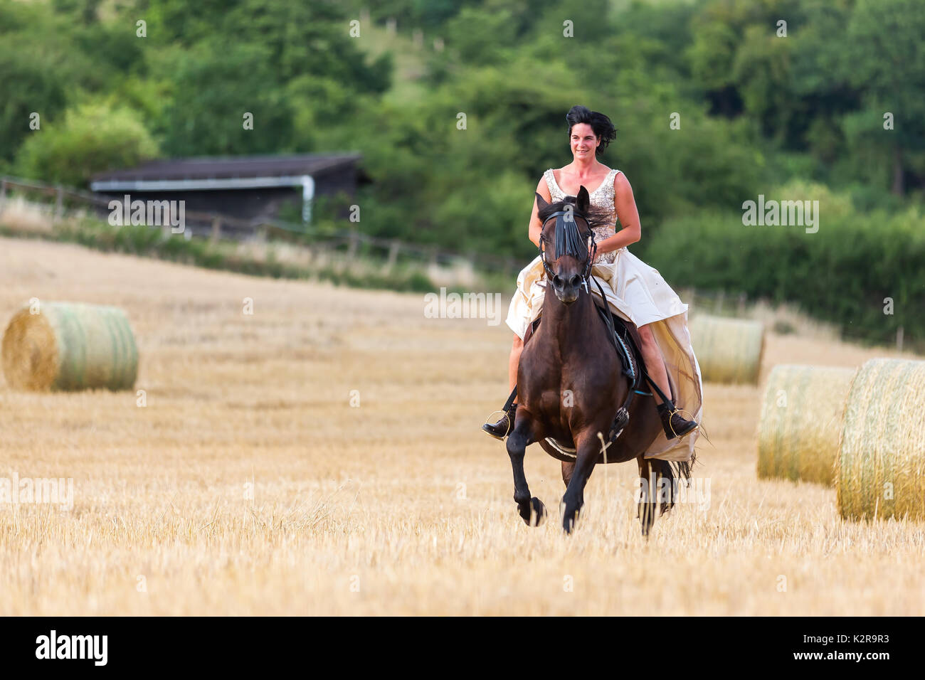 mature woman riding an andalusian horse in the field stock photo