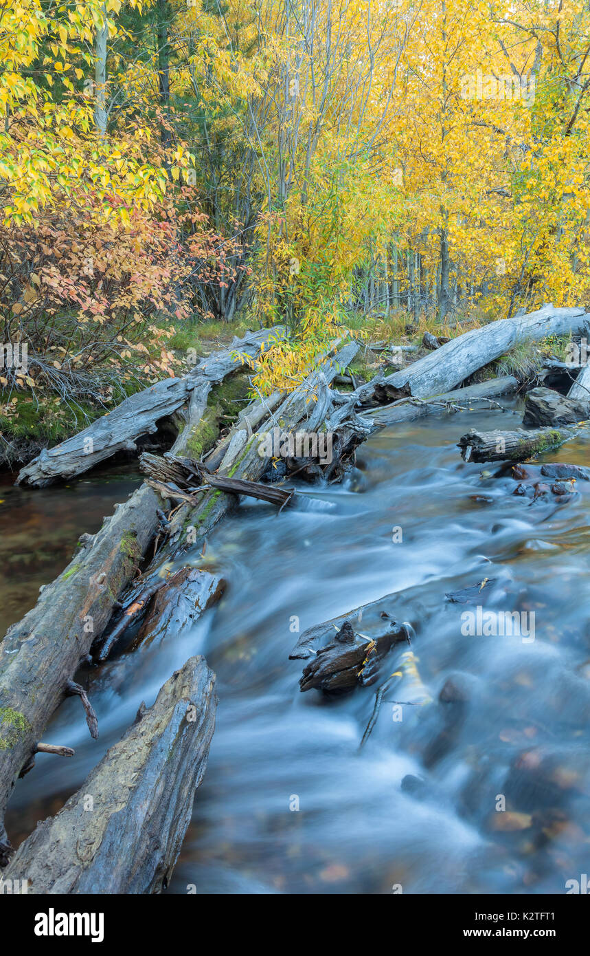 Lee Vining Creek and the fall foliage in Inyo National Forest, Californina. Stock Photo