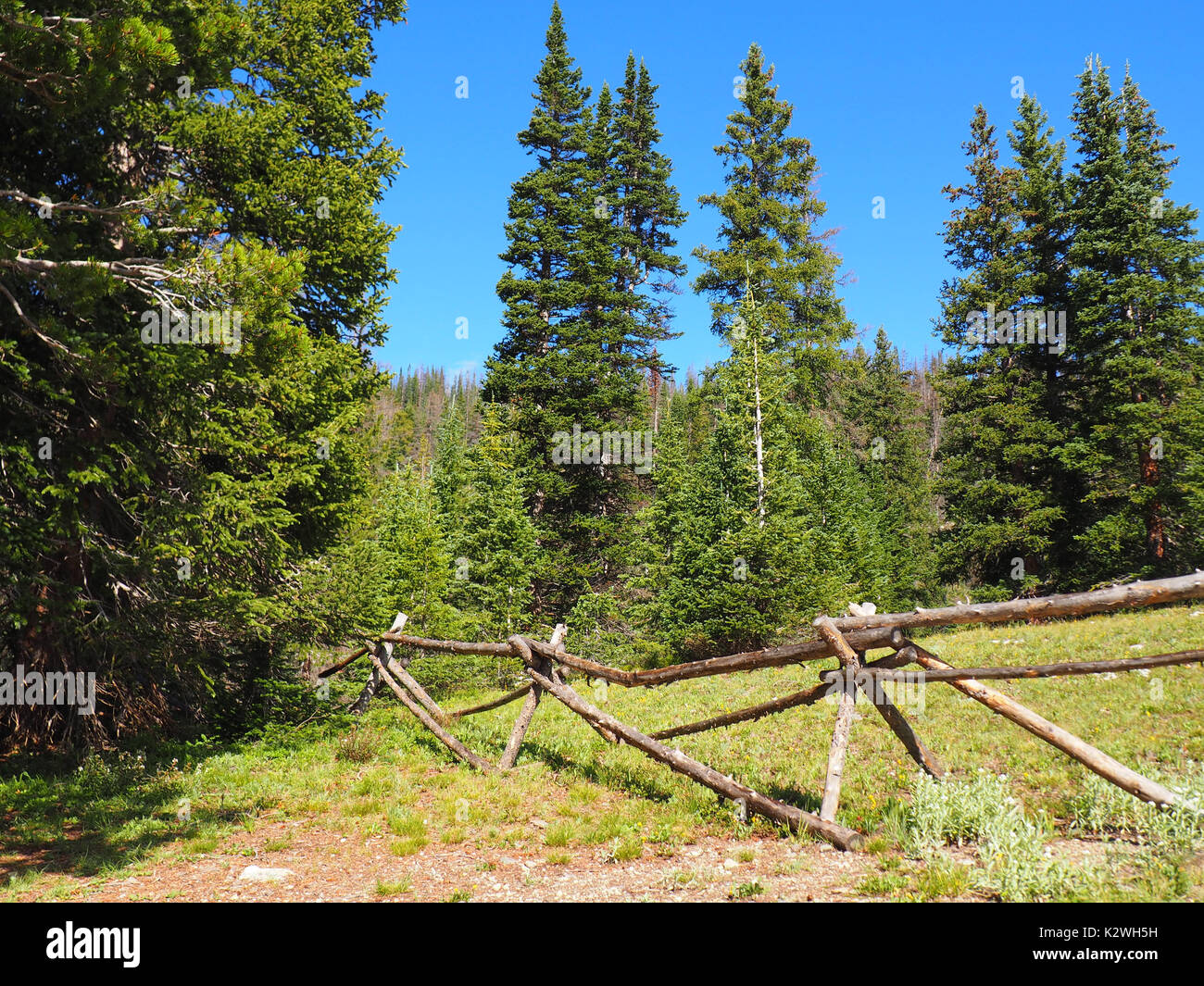 a simple tree fence nestled among evergreen trees in rocky mountain