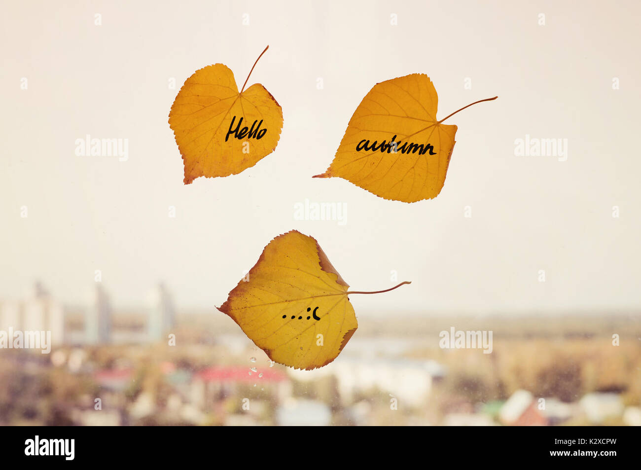 Yellow Dry Leafs With Inscription Hello Autumn Written On Them On The  Background Of Diffuse Dull