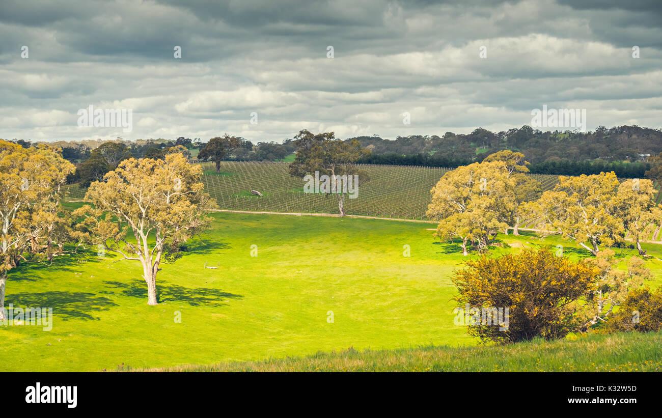 Eucalyptus agriculture stock photos eucalyptus for Adelaide hills landscape