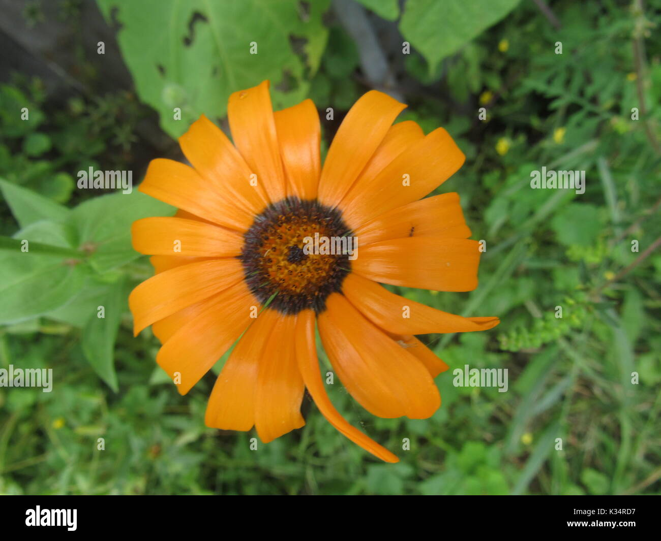 Easy To Grow Garden Flowers In Various Colors And Types Daisy Type