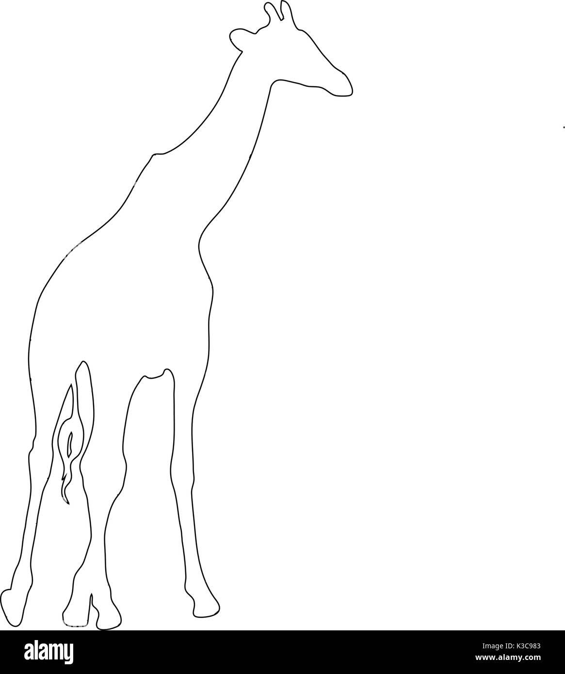 giraffe silhouette outline stock photos u0026 giraffe silhouette