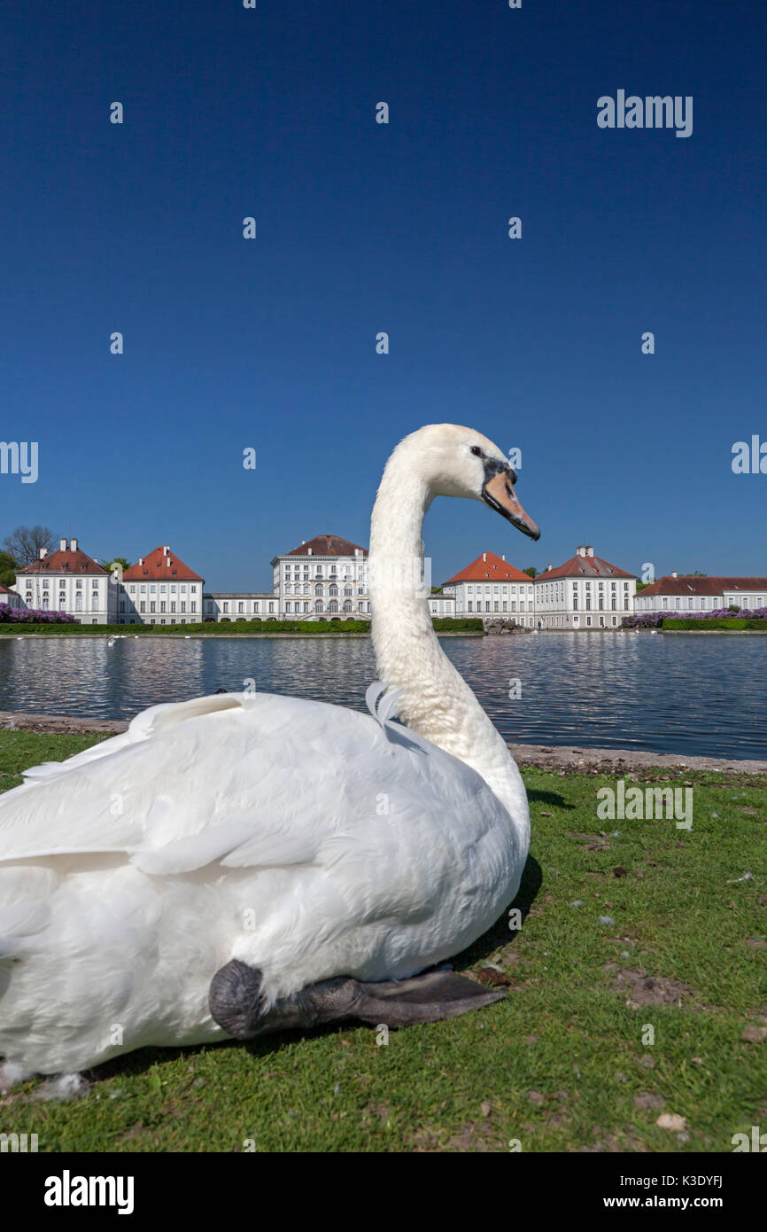 swan castle stock photos swan castle stock images alamy. Black Bedroom Furniture Sets. Home Design Ideas