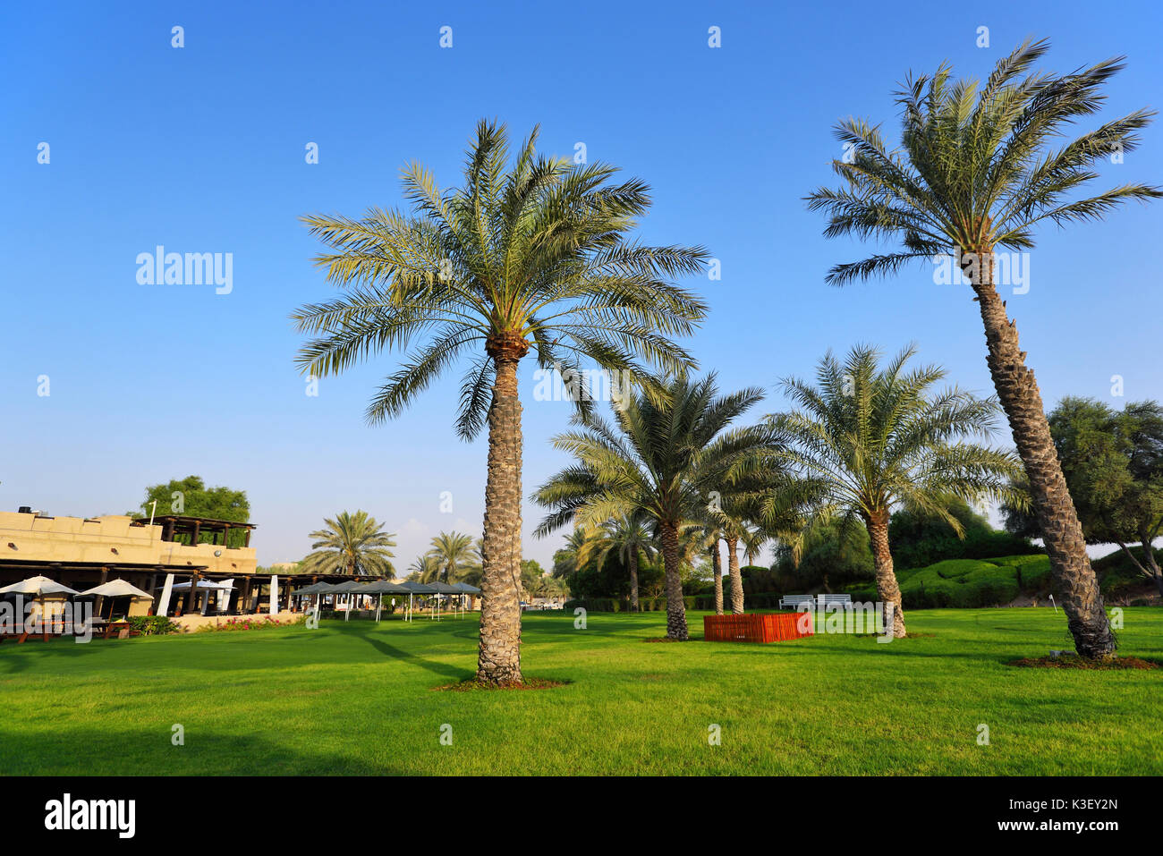 libya desert oasis stock photos libya desert oasis stock images alamy. Black Bedroom Furniture Sets. Home Design Ideas