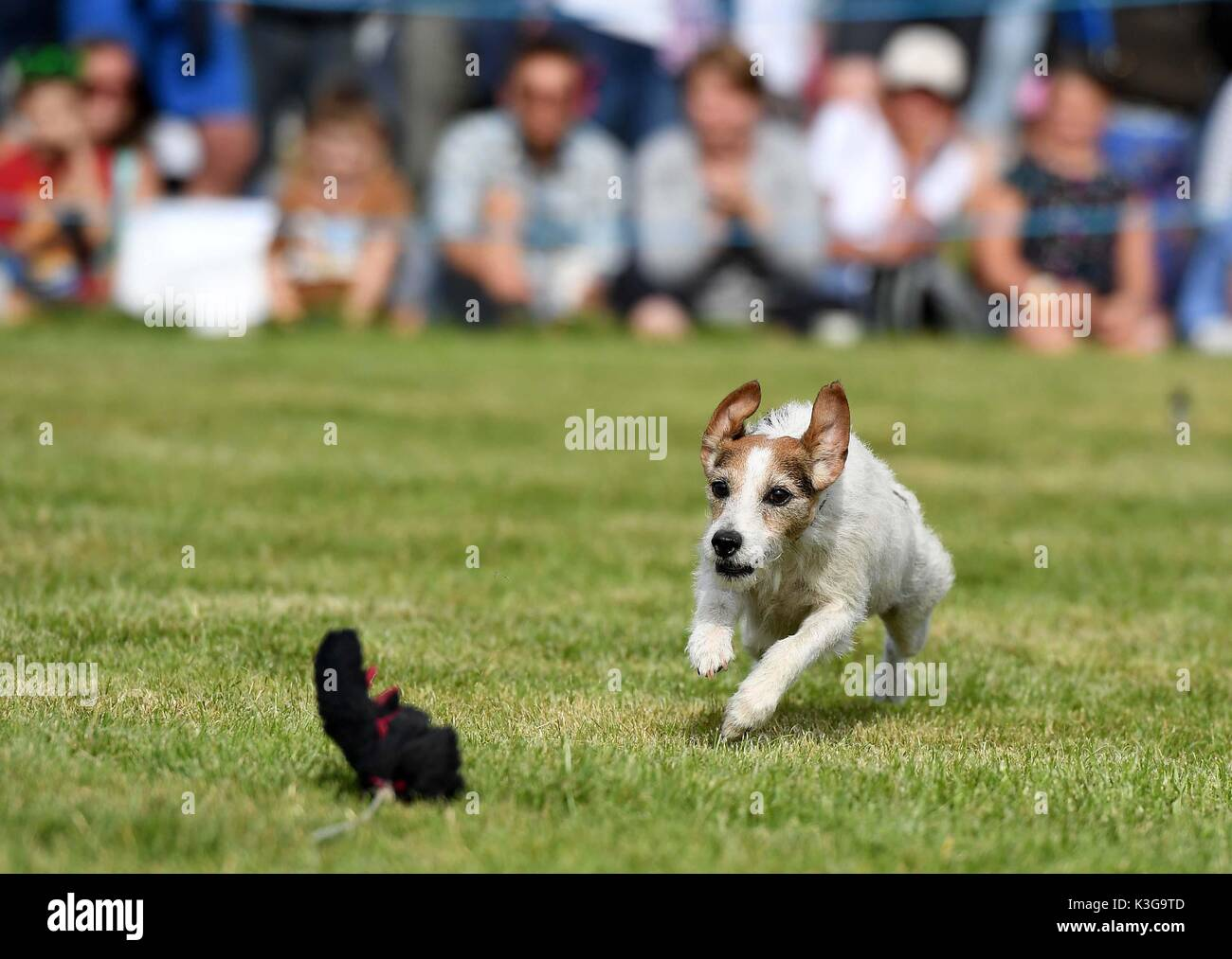 Dog Show Builth