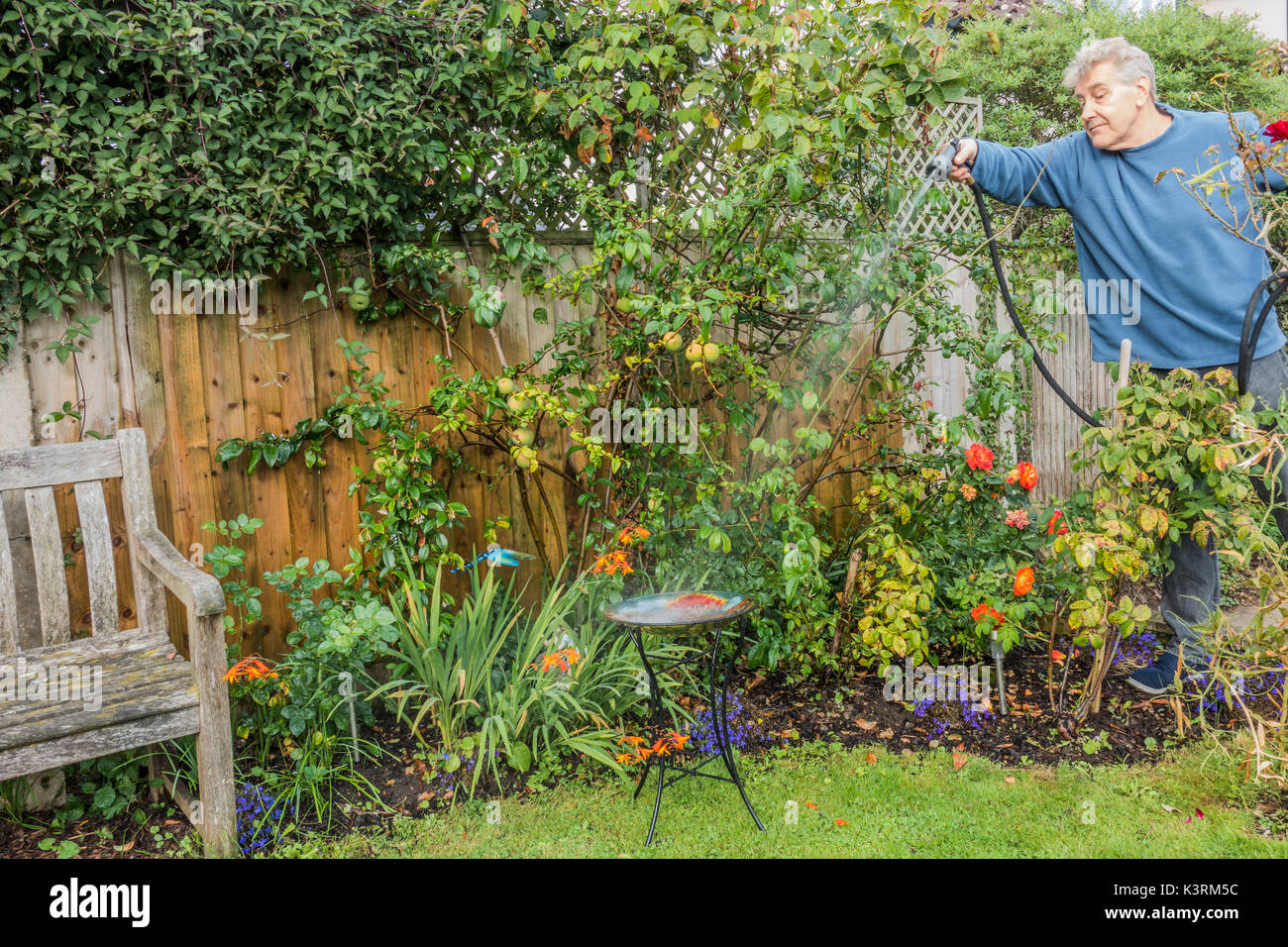 hose garden wet spray stock photos u0026 hose garden wet spray stock