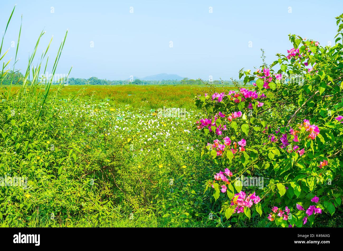 Sri lankan nature boasts scenic landscapes with beautiful flowers sri lankan nature boasts scenic landscapes with beautiful flowers and greenery izmirmasajfo
