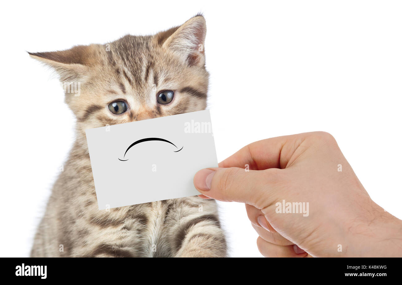 Unhappy Cat Stock Photos & Unhappy Cat Stock Images - Alamy