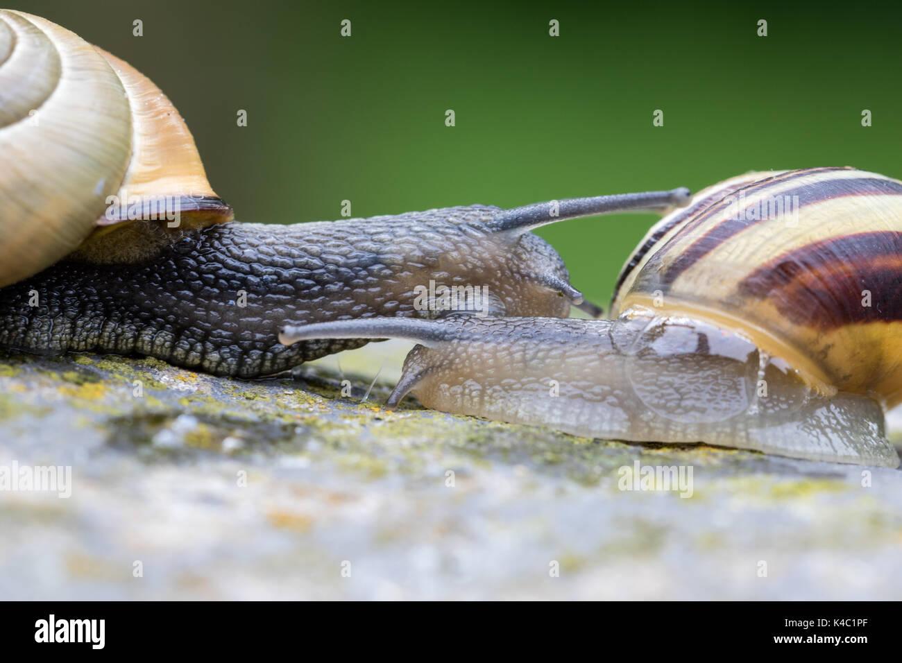 land snails stock photos u0026 land snails stock images alamy