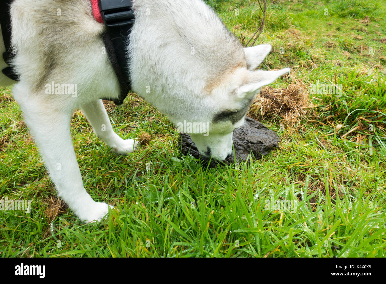 Dogs Who Eat Horse Manure