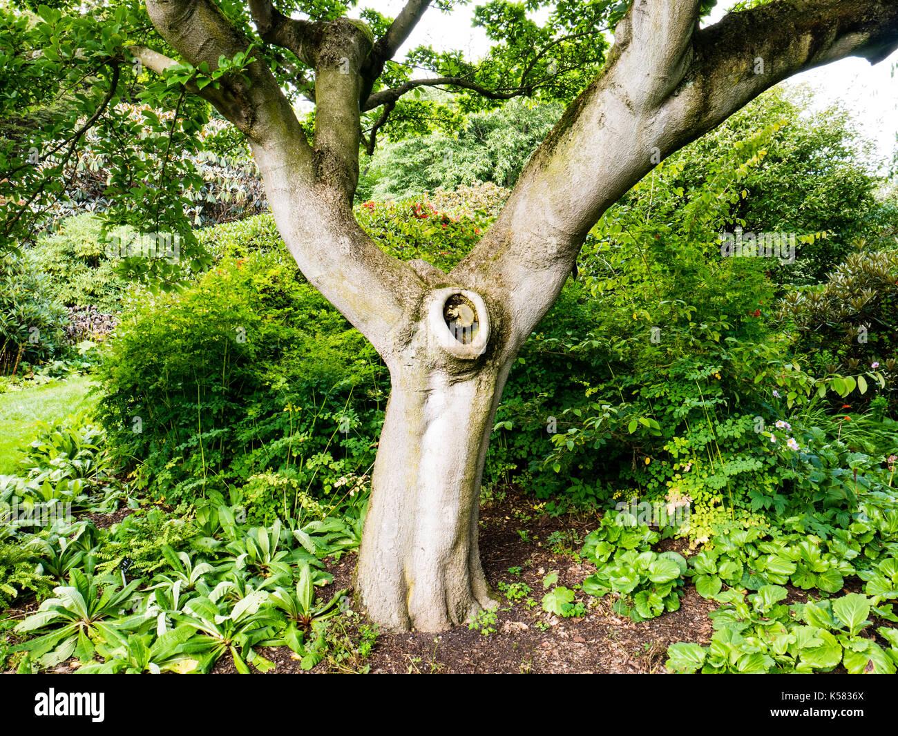 Tree royal botanic gardens stock photos tree royal for Garden trees scotland
